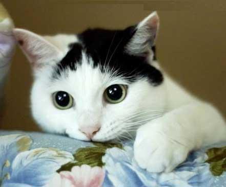 Related Pictures poza cu pisica poze cu cai iarna catei haski ...