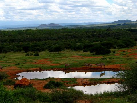Zebre la Kilaguni