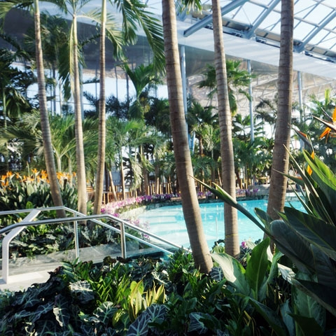 Therme Bucuresti - The Palm